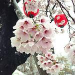 雪、桜、、、