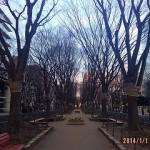 2014年1月の定禅寺通