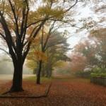 霧に包まれた仙台の朝