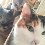 最近のネコたち