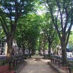 2015年6月の定禅寺通