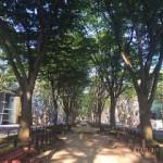 2015年8月の定禅寺通