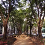 2015年9月の定禅寺通