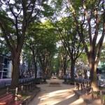 2015年10月の定禅寺通