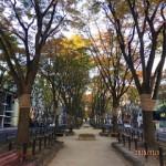 2015年11月の定禅寺通